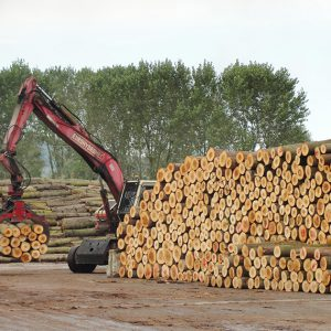 Pile of poplar logs ready for transport to processing partner