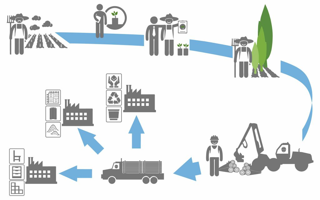 Flow chart which shows the processes of D4EU (unsatisfied farmers due to low yields, contracts with project partners to grow poplar plantations, happy farmer due to well growing poplars, poplar harvest, transportation logistics of the poplar dendromass to 3 different entrepreneurs connected with the production of diverse products)