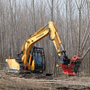 Multi-stem Harvester cutting poplars