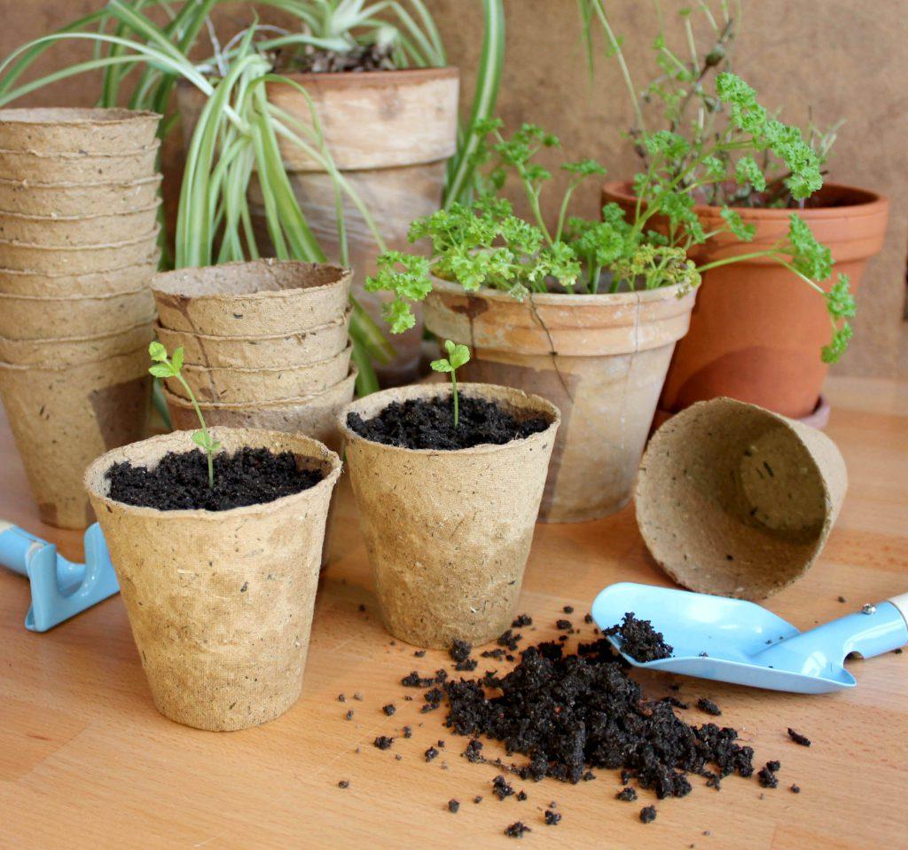 fibre pulp plant pots for gardening