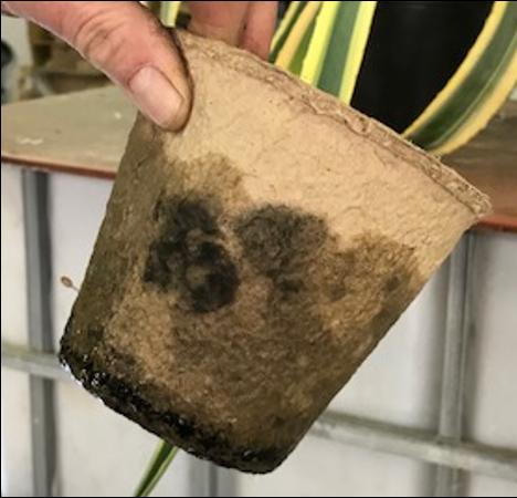 moulded fibre pulp plant pot