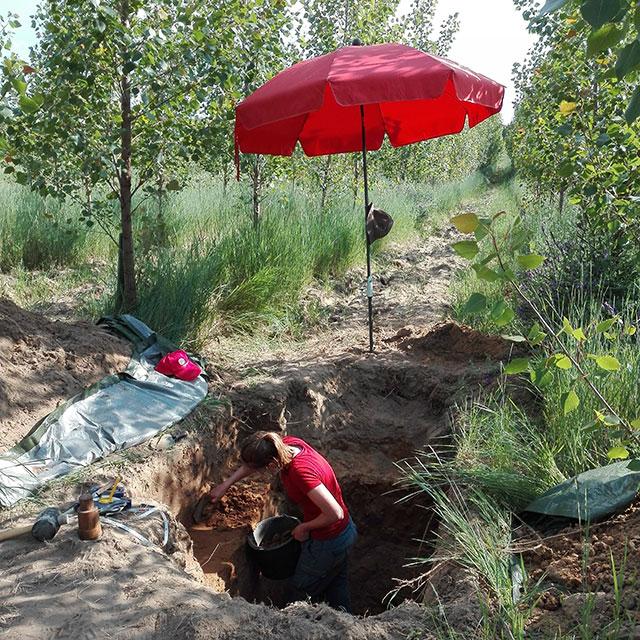 Researcher in Poplar plantation working on soils samples