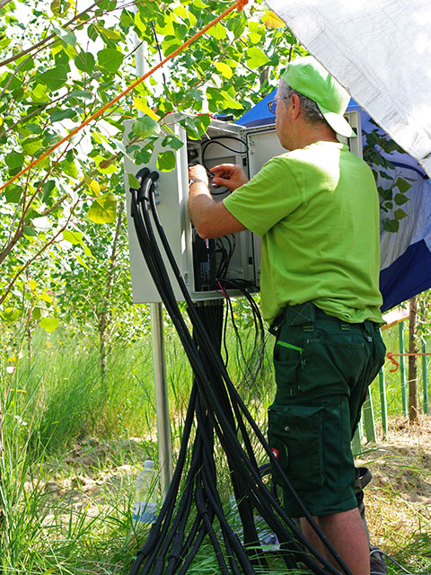 Researcher in Poplar plantation working at water measurement